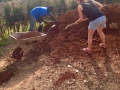 shovelling marram